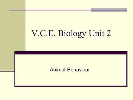 V.C.E. Biology Unit 2 Animal Behaviour. What is behaviour? Individual behaviours are those related to the movement of an animal or its physiology. Such.