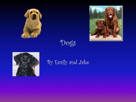 Dogs By Emily and Jake. Playing With Your Dog Play with your dog every day. Make sure you walk your dog outside every day. Make sure your dog has toys;