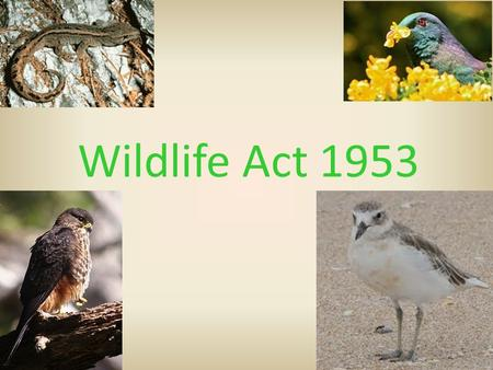 Wildlife Act 1953. Purpose  The Wildlife Act deals with the protection and control of wild animals and birds and the management of game. Permits are.