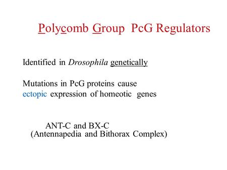 Polycomb Group PcG Regulators Identified in Drosophila genetically Mutations in PcG proteins cause ectopic expression of homeotic genes ANT-C and BX-C.
