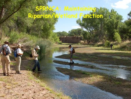 "SPRNCA: Maintaining Riparian/Wetland Function. What does that mean today? Isn't SPRNCA already ""protected and enhanced?"" When will it be ""good enough""?"