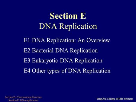 Section D: Chromosome Structure Section E: DNA replication Yang Xu, College of Life Sciences Section E DNA Replication E1 DNA Replication: An Overview.