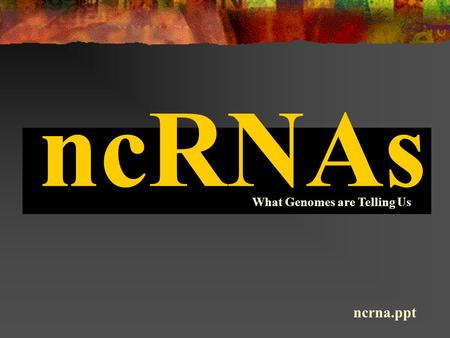 NcRNAs What Genomes are Telling Us ncrna.ppt. ncRNA genes are difficult to discover! small an annotational and statistical concern no ORFs and no polyadenylation.