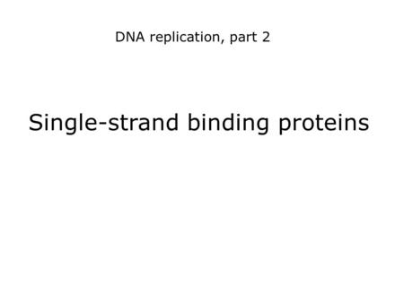 Single-strand binding proteins DNA replication, part 2.