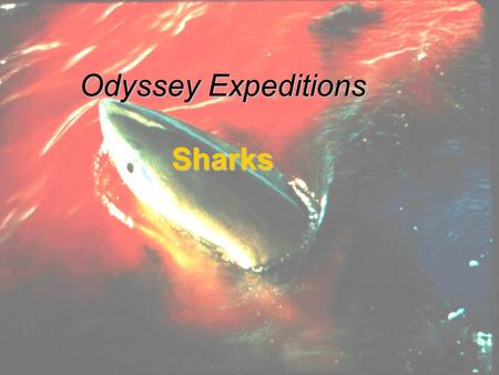 1 Odyssey Expeditions Sharks. 2 Sharks Class Chrondrichthyes -cartilaginous skeleton All are carnivorous Poikilotherms Rough, thick skin, Placoid scales.