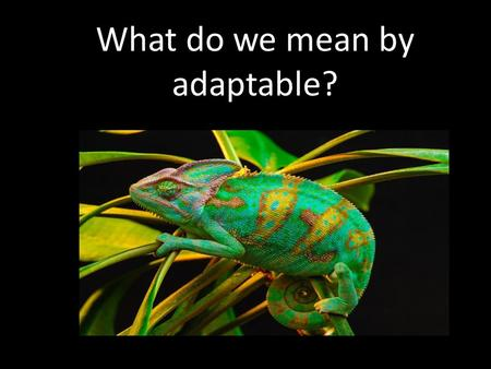 What do we mean by adaptable?. How do we need to be adaptable at school?