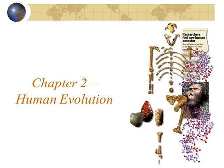 human evolution summary