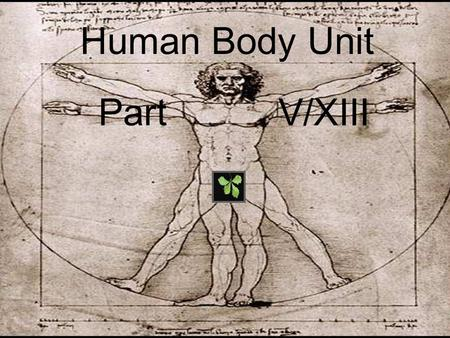 <strong>Human</strong> Body Unit Part V/XIII. <strong>Human</strong> Body Unit Part V/XIII.
