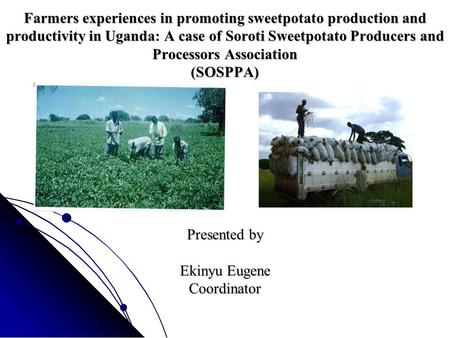Farmers experiences in promoting sweetpotato production and productivity in Uganda: A case of Soroti Sweetpotato Producers and Processors Association (SOSPPA)