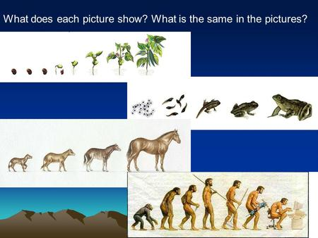 What does each picture show? What is the same in the pictures?