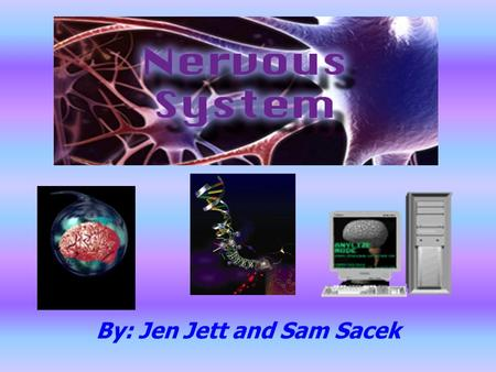 By: Jen Jett and Sam Sacek. Why is it important??? Communicate information and processes to causes it reaction in other parts of the body A network that.