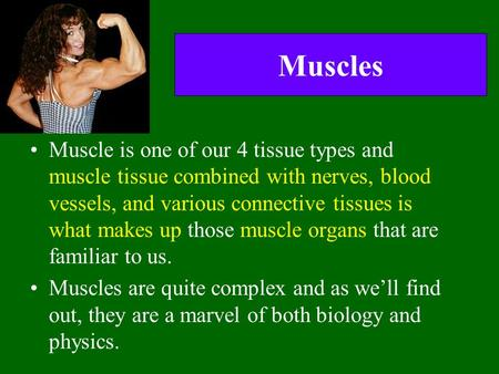 Muscles Muscle is one of our 4 tissue types and muscle tissue combined with nerves, blood vessels, and various connective tissues is what makes up those.