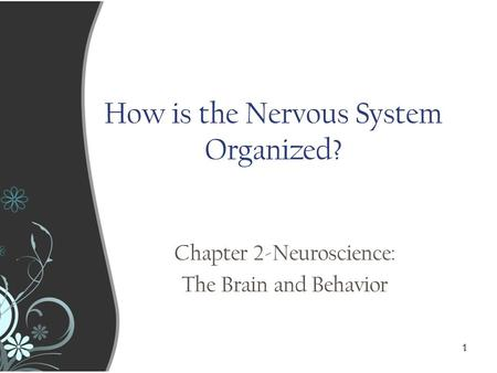 1 11 How is the Nervous System Organized? Chapter 2-Neuroscience: The Brain and Behavior.