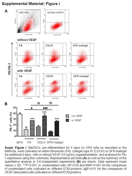Supplemental Material: Figure I cells onlyisotype control w/o VEGF w/ VEGF with VEGF without VEGF FN COLIV GFR matrigel PE-Flk-1 A B Suppl. Figure I. MaGSCs,