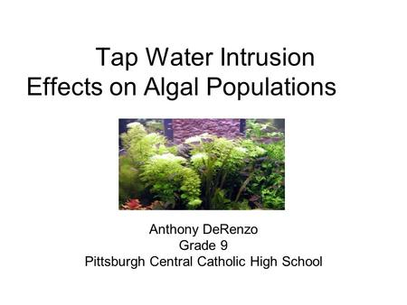 Tap Water Intrusion Effects on Algal Populations Anthony DeRenzo Grade 9 Pittsburgh Central Catholic High School.