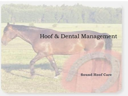 Hoof & Dental Management Sound Hoof Care. Objectives  COMPETENCY  EQ16.00- Determine management practices for sound hoof and dental care.  OBJECTIVE.
