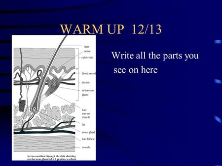 WARM UP 12/13 Write all the parts you see on here.