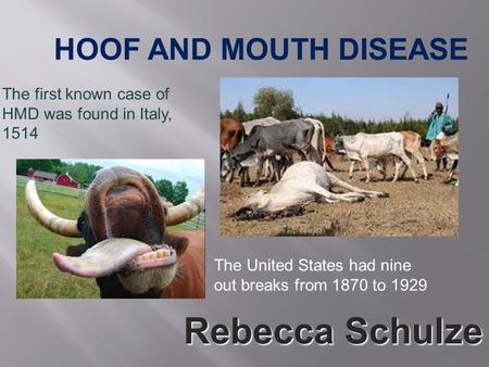 HOOF AND MOUTH DISEASE The first known case of HMD was found in Italy, 1514 The United States had nine out breaks from 1870 to 1929 Rebecca Schulze.