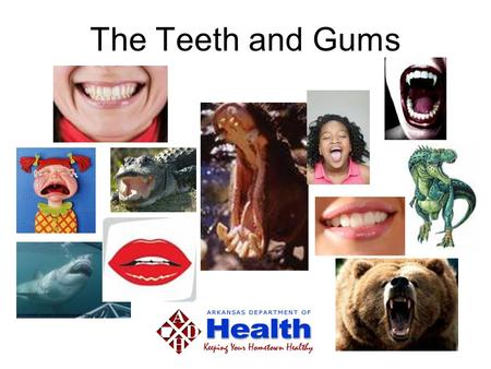 The Teeth and Gums. What are they good for? Talking Talking Office of Oral Health.