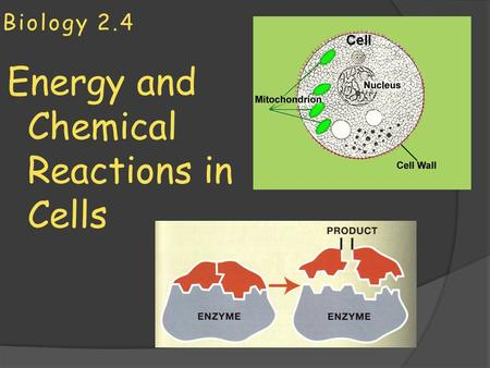 Energy and Chemical Reactions in Cells