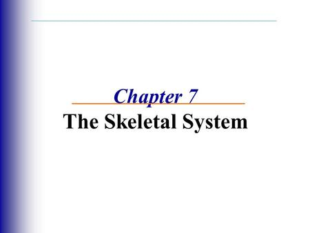 Chapter 7 The Skeletal System
