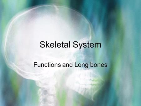 Skeletal System Functions and Long bones. Functions 1.Framework –The bones form a framework to support the body's muscles, fat, and skin.
