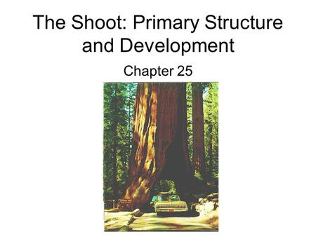 The Shoot: Primary Structure and Development Chapter 25.