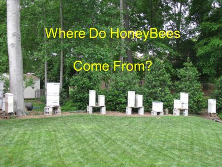 Where Do HoneyBees Come From?. There are five general ways to begin a colony of bees.