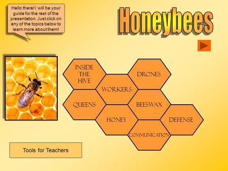 Honeybees Tools for Teachers