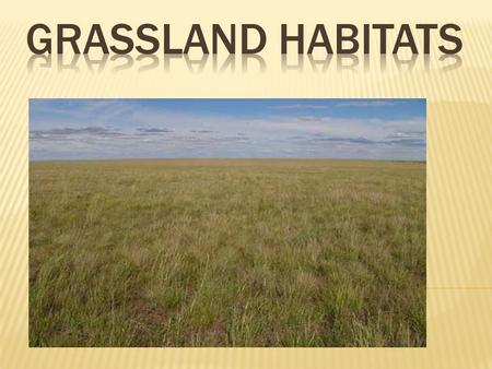 There are two main types of grasslands in the world.  1. Savanna- found in warm or hot climates with a specific rainy season that is half of the year.