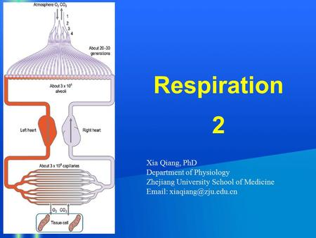 Respiration 2 Xia Qiang, PhD Department of Physiology Zhejiang University School of Medicine