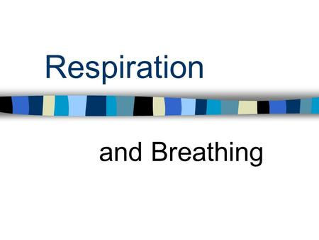 Respiration and Breathing. Anatomy Know the pathway for inhaled and exhaled air in the respiratory system Know terms such as nasal cavity, oral cavity,