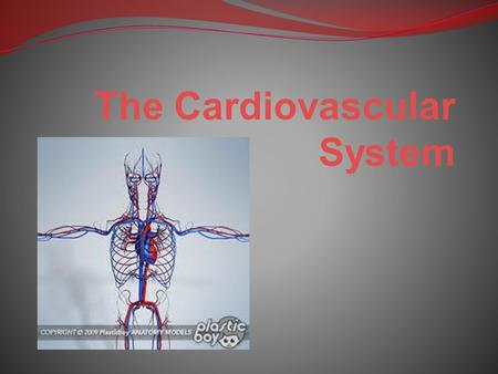 The Cardiovascular System. It is also known as the circulatory system This system consists of: The heart & lungs Blood vessels The lymphatic system.