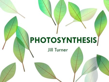 PHOTOSYNTHESIS Jill Turner. General Placement Information  School: Hamilton Elementary  Teacher: Rozlynn Cowell  Grade: fourth/fifth  Class Size: