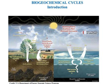 BIOGEOCHEMICAL CYCLES Introduction Credit: U.S. Department of Energy Genomic Science Program.