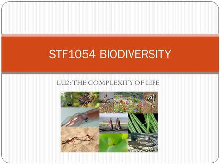 LU2: THE COMPLEXITY OF LIFE STF1054 BIODIVERSITY.