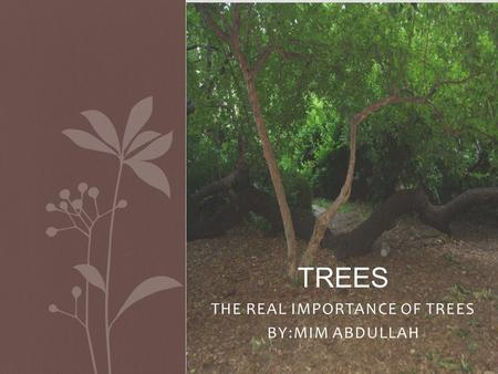 THE REAL IMPORTANCE OF TREES BY:MIM ABDULLAH TREES.