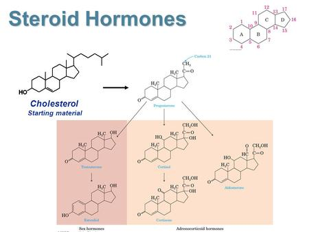 Steroid Hormones Cholesterol Starting material. Steroid Sex Hormones Androgens: Androgens: male sex hormones synthesized in the testes responsible for.