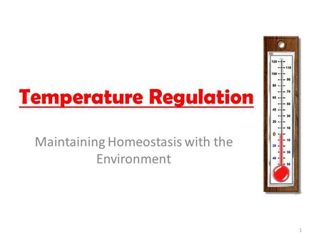 Temperature Regulation Maintaining Homeostasis with the Environment 1.