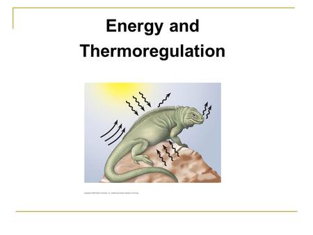 Energy and Thermoregulation. Maintaining internal environments: Challenge for all living environments.