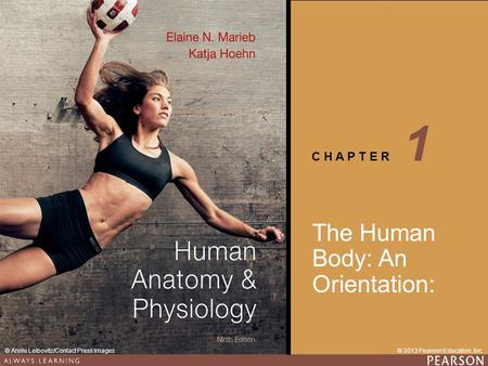 1 The Human Body: An Orientation:.