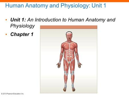 Human <strong>Anatomy</strong> <strong>and</strong> <strong>Physiology</strong>: Unit <strong>1</strong> Unit <strong>1</strong>: An Introduction to Human <strong>Anatomy</strong> <strong>and</strong> <strong>Physiology</strong> <strong>Chapter</strong> <strong>1</strong> © 2013 Pearson Education, Inc.