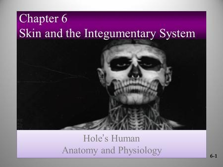 6-1 Hole ' s Human Anatomy and Physiology Hole ' s Human Anatomy and Physiology Chapter 6 Skin and the Integumentary System.