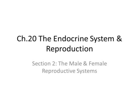 Ch.20 The Endocrine System & Reproduction