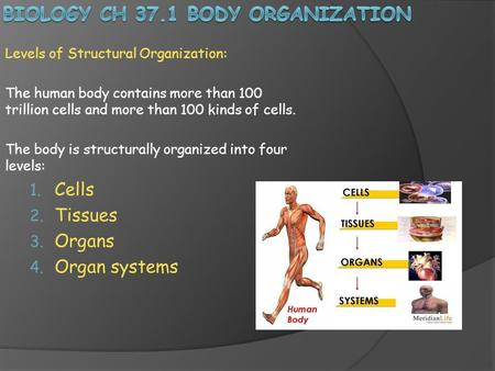 Biology Ch 37.1 Body organization