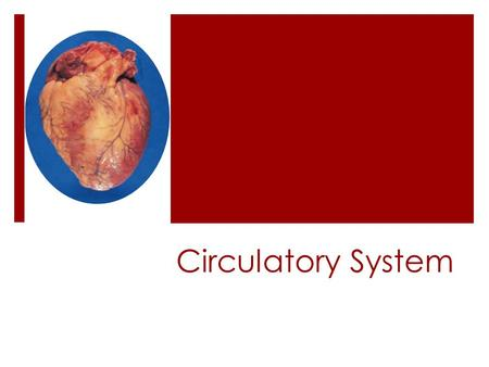Circulatory System  The circulatory system is composed of a group of organs which transport food and oxygen to and remove waste from every cell in the.
