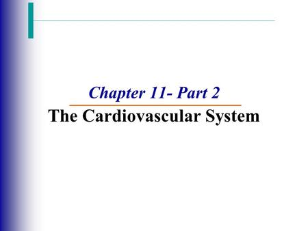 Chapter 11- Part 2 The Cardiovascular System