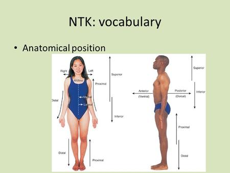 NTK: vocabulary Anatomical position. metabolism prompt Many people think that if someone had a high metabolism then they would be fit, athletic, healthy…