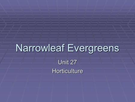 Narrowleaf Evergreens Unit 27 Horticulture. Features of evergreens  Generally remain green year-round  Are adaptable to various soil types & weather.