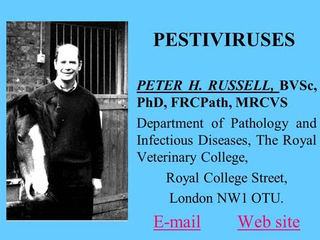PESTIVIRUSES PETER H. RUSSELL, BVSc, PhD, FRCPath, MRCVS Department of Pathology and Infectious Diseases, The Royal Veterinary College, Royal College Street,